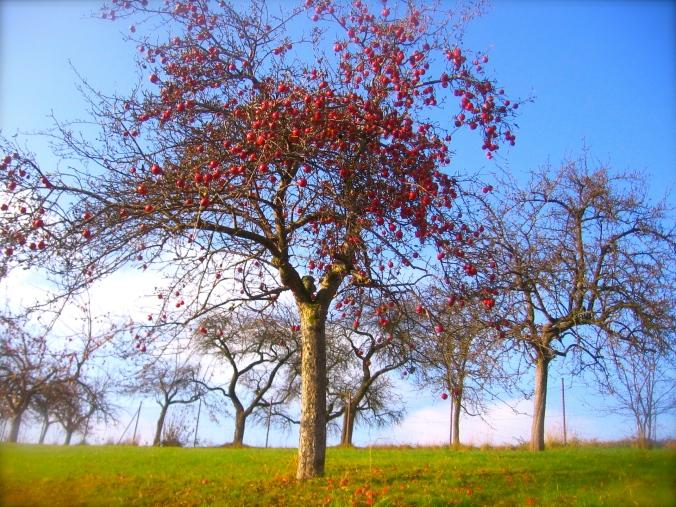 apple_tree_in_autumn